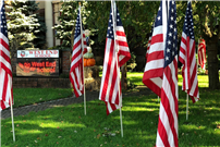 Photo of American Flags for Veterans Day